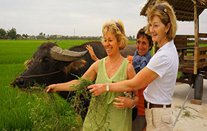 Hoi An Buffalo Cart Experience
